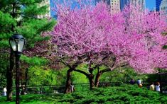 Preview wallpaper tree, park, city, flowers
