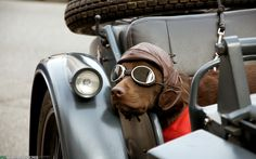 motorcycle car for dogs | Motorcycle Dog Desktop Wallpapers and Backgrounds