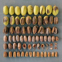 Patterns of nuts