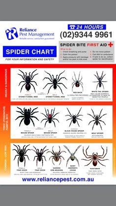 Spider Chart - Reliance Pest Management