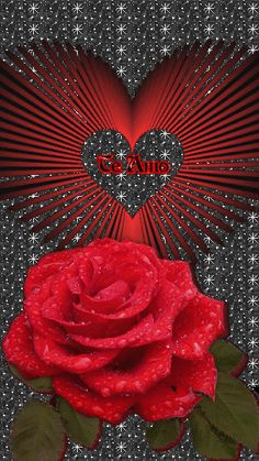 Latest animation I made using this beautiful rose image Love Heart Images, Love You Images, Rose Images, Beautiful Flowers Wallpapers, Beautiful Rose Flowers, Love Rose, I Love You Honey, Love You Gif, Beautiful Love Pictures