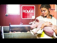 """Une vie de cochon Documentaire diffusé le 12/11/2013 sur France 2 L'élevage de nos jours s'appelle """" USINE à VIANDE"""""""