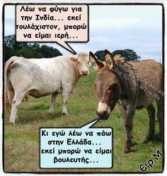 Αστειογράφημα (ΚΤ) Greek Memes, Funny Greek, Greek Quotes, Funny Texts, Funny Jokes, Hilarious, Funny Images, Funny Photos, Big Cats Art