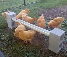 DIY Cinder Block Chicken Feeder - super easy to setup and cheap too... #chickens #homestead #homesteading