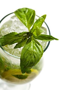 Discover cocktail recipes, food and wine matches, and guides to all your favourite liquor at Dan Murphy's. Gin Lemon, Wine Recipes, Liquor, Herbalism, Plant Leaves, Cocktails, Drinks, Food And Drink, Vegetables