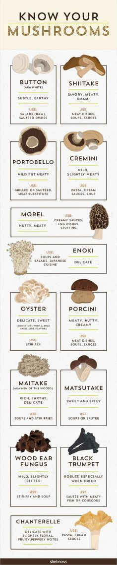 It's time to get your fungus knowledge down with this mushroom infographic #mushroominfographic