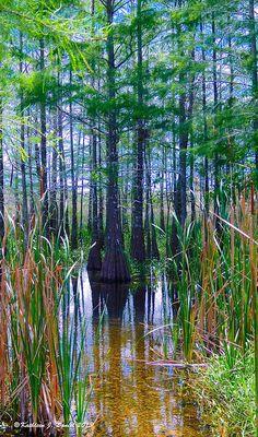 ✯ Cypress Garden