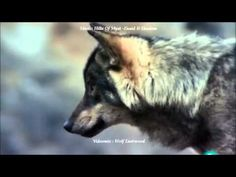 Wolf-Song : Hills Of Myst - YouTube