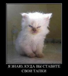 картины с кошками приколы - Поиск в Google