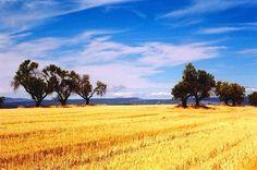 Que hermoso el cielo de Provence... tan azul!