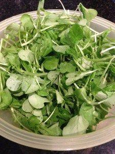 Growing Micro-Greens! #gardening #growyourown #diy #vegetablegarden #vegetables #microgreens
