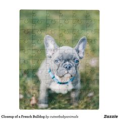 Shop Closeup of a French Bulldog Jigsaw Puzzle created by cutestbabyanimals. Animal Skulls, Diy Face Mask, Pink And Green, Close Up, Camouflage, French Bulldog, Jigsaw Puzzles, Unique Gifts, Kids Shop