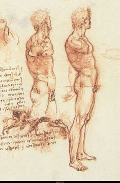 Da Vinci. He seems to have been spellbound by anatomy.