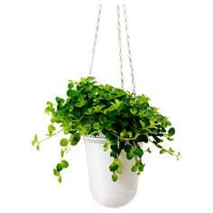 HIMALAYAMIX Potplant - diverse soorten - IKEA Hanging Plants, Potted Plants, Luz Solar, Easy Care Plants, Polypropylene Plastic, Container Gardening, Decorating Your Home, Planter Pots, Lights