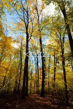 image of autumn trees. - Low angle view of autumn trees.