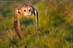 british wildlife photography - Google Search