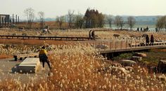 rsz_river_forest_island_5 « Landscape Architecture Works | Landezine