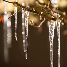 Nordic Icicle Ornaments from Olive & Cocoa. Someday, I want a tree, with nothing but white lights and these icicles.
