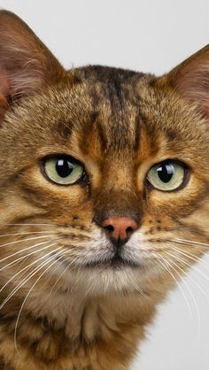 """""""If cats could talk, they wouldn't."""" --Nan Porter"""