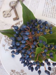 Viburnum Berries Fruit Love, Fresh Fruit, Berry Wedding, Wedding Flowers, Wedding Colors, Wedding Ideas, Privet Berries, September Flowers, September 7