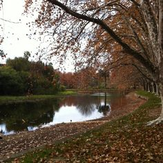 Hyde Park in Perth is a magic park chracterised by its majestic Plane trees over a century old. Go for a walk, have a picnic and enjoy the sunshine! #celebratewa
