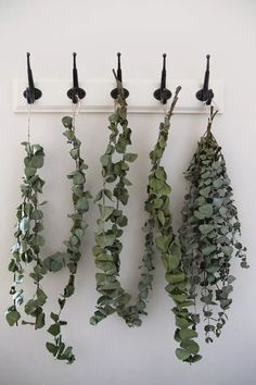 What is the eucalyptus plant, can you grow it, and what is it used for? This article covers all the answers to these questions. Privacy Plants, Shade Garden Plants, Hosta Plants, Balcony Plants, Jade Plants, Bonsai Plants, Houseplants, Propagate Succulents, Potted Garden