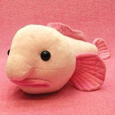 Blobfish in the water! | Fina fiskar! | Pinterest | Blobfish ...