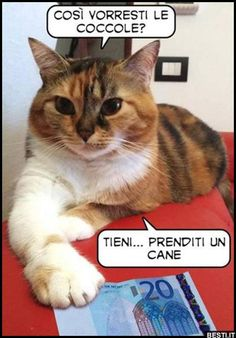 Memes Italiano Animali 39 Ideas For 2019 Animals And Pets, Funny Animals, Cute Animals, Funny Images, Funny Photos, Funny Twilight, Cats Are Assholes, Selfies, Funny Test