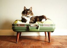 Cozy Cargo Suitcase Pet Bed - Green and Brown - Upcycled Luggage - Free Shipping