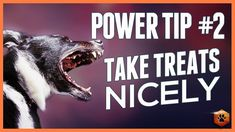 Taking Treats Nicely Power Tip - Teach your Dog with Good Targeting Training Quotes, Puppy Training Tips, Dog Training Videos, Training Your Dog, Mites On Dogs, Pet Dogs, Dogs And Puppies, Dog Ages, Sleeping Dogs