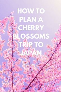 Japan's cherry blossoms put on a spectacular show every spring with visitors coming from far and wide to view the incredible sight. Click through to post for tips on planning a trip! the real japan, real japan, resources, tips, tricks, inspiration, idea, guide, japan, japanese, explore, adventure, tour, trip, product, tool, map, information, tourist, plan, planning, tools, kit, products http://www.therealjapan.com/subscribe