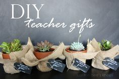 just the bees knees: Simple DIY Teacher Gift using Succulents