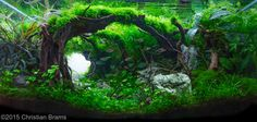 2015 AGA Aquascaping Contest - Entry #587