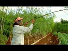 """The Facts About Zija """"Moringa Oleifera"""" Moringa Benefits, Miracle Tree, Super Foods, Medicinal Plants, Health Products, Natural Cures, Health And Nutrition, Mornings, Garden Plants"""