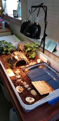 3 toed box turtle indoor habitatBest Picture For Fishes hacks For Your TasteYou are looking for something, and it is going to tell you exactly what you are looking for, and you didn't find that picture. Tortoise House, Tortoise Habitat, Baby Tortoise, Sulcata Tortoise, Tortoise Care, Tortoise Turtle, Giant Tortoise, Tortoise Shell, Turtle Cage