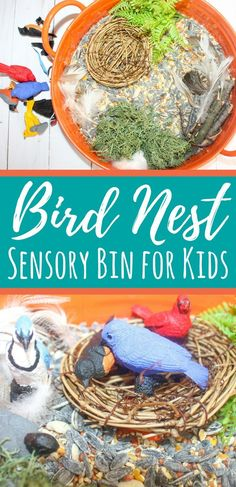 This birds sensory bin uses bird seed as a base and materials for nest building. The birds included in this sensory bin are great for play. Sensory Boxes, Sensory Table, Sensory Play, Animal Activities, Preschool Activities, Preschool Curriculum, Preschool Printables, Homeschooling, Bird Crafts Preschool