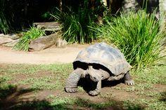 Zoo Australia. Beerwah. Queensland.