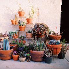 Potted cactus garden via thedoeorthedeer
