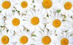 Jax Jones - Full size daisy backround - 2560x1600 px