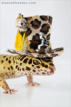 10 Cute Halloween Photos - Gecko and Hat, too cute!