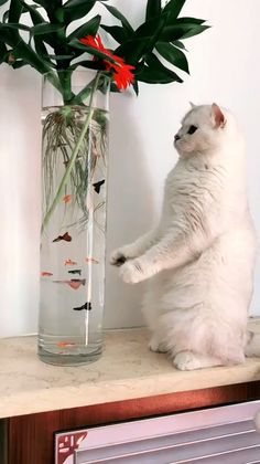 Facts About Cats That Will Blow Your Mind Catlovers Kittens - Cute Funny Animals, Cute Baby Animals, Animals And Pets, Cute Cats, Funny Cats, Silly Cats, I Love Cats, Crazy Cats, Beautiful Cats