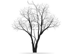 Bare Tree Stock Photos Images, Royalty Free Bare Tree Images And ...