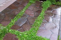 ヒメイワダレソウの花 Compost Barrel, Glitter Backdrop, Worm Composting, 40th Birthday Parties, Backdrops For Parties, Stone Work, Green Garden, Garden Paths, House Plants