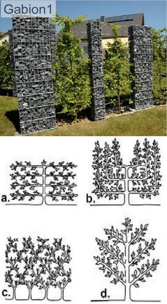 Gabion1 fence with espalier fruit trees