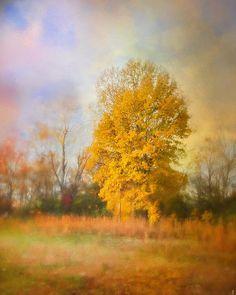 Golden Autumn Splendor - Fall Landscape