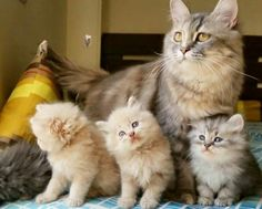 TOP 36 Cats and Kittens | Funny Cat | DomPict.com