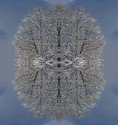 Tree of a life... / Baum eines Lebens...