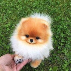 Any dogs and puppies that are cute. See more ideas about Cute Dogs, Cute puppies Tags: Baby Animals Super Cute, Cute Little Animals, Cute Funny Animals, Cute Cats, Cute Little Dogs, Cutest Animals, Cutest Pets, Funny Images Of Animals, Cute Baby Dogs