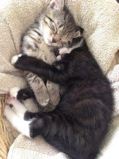 The cuteness...