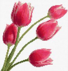 Tulips|17|3140